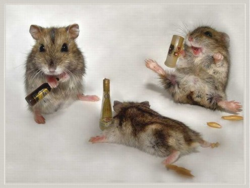 drunk-mice-animal-humor-1993688-1024-768-800x600